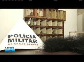 Aves são apreendidas em Coronel Fabriciano e o homem é detido por suspeita de tráfico - Homem iria transportar as aves para Santa Catarina.