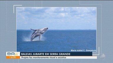 Projeto 'Baleias na Serra' monitora temporada de baleias jubarte no litoral baiano - O projeto faz monitoramento visual e acústico em Serra Grande