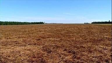 Em MT, agricultores aproveitam vazio sanitário da soja para preparar o solo - Parada obrigatória é importante para evitar a proliferação do fungo causador da ferrugem asiática