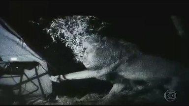 Detetive Virtual: vídeo de homem cercado por leões em barraca é verdadeiro ou falso? - Imagens mostram homem cercado por três felinos, que chegam até a mexer na barraca.