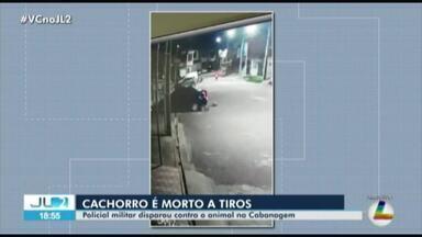 Morte de cachorro revolta moradores no bairro da Cabanagem, em Belém - O animal foi morto a tiros por um policial militar.