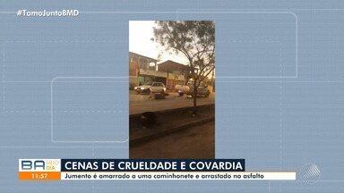 Denúncia: jumento amarrado em automóvel e arrastado pelas ruas de Barreiras - Animal está sendo tratado no Centro de Zoonoses do município.