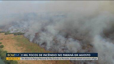 Animais são resgatados no Parque Nacional de Ilha Grande - Área é tomada por incêndio há mais de dez dias.