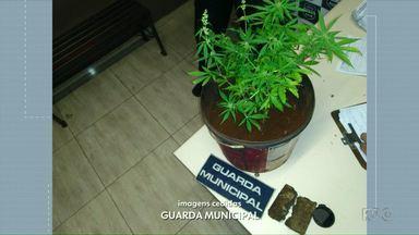 Guarda Municipal apreende vaso com planta de maconha no Três Lagoas - Um rapaz de 18 anos foi levado para a delegacia.