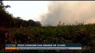 Incêndio em Ilha Grande já dura 10 dias - Dos 76 mil hectares de área do parque, o fogo já queimou quase 47 mil, ou seja, mais de 60% já foi incendiado.