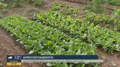 Lei em Varginha quer transformar terrenos públicos em hortas - Lei em Varginha quer transformar terrenos públicos em hortas