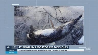 Mais de 40 pinguins são encontrados mortos no Litoral Norte catarinense - Mais de 40 pinguins são encontrados mortos no Litoral Norte catarinense