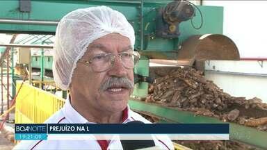Produtores têm prejuízo na produção de mandioca por causa da seca - Indústria já sente a falta do produto e está buscando em outros estados