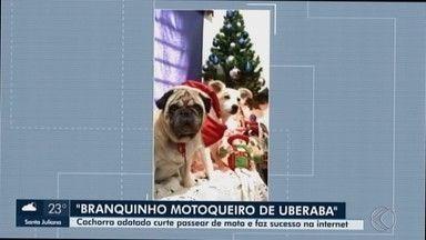 Família de Uberaba adota cachorro que adora passear de moto - Além de dócil, 'Branquinho' adora brincar com os novos donos.