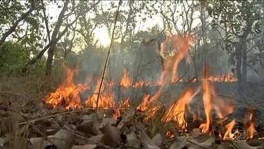 Ministério da Defesa monta centro de operações para combater queimadas - Intenção é iniciar operação a partir de Porto Velho (RO). Governo confirmou que vai liberar parte da verba do Ministério da Defesa que estava bloqueada.