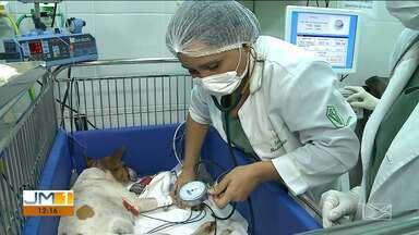 Comissão da defesa animal da OAB investiga casos de maus tratos a animais em São Luís - Comissão vai cobrar punição dos responsáveis pelo ataque a cadela que foi encontrada no estacionamento de uma faculdade em São Luís.