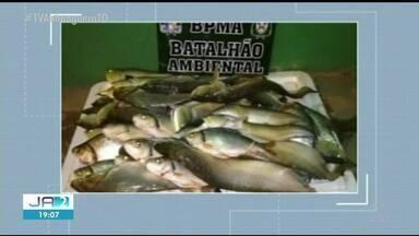 Seis homens são presos transportando mais de 50 quilos de peixe ilegalmente - Seis homens são presos transportando mais de 50 quilos de peixe ilegalmente