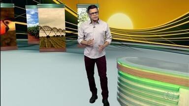 Confira os destaques no Jornal do Campo deste domingo (8) - Tecnoshow se torna referência nacional em vendas no agronégócio em Rio Verde e conheça o processo de produção de alho em Cristal.
