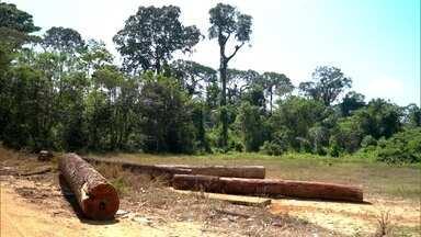 Amazônia e o desmatamento - 2º episódio