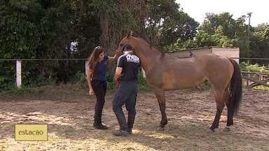 Pilates tem sido usado para ajudar no fortalecimento da musculatura corporal dos cavalos - Técnica tem sido usada para obter vantagens para os animais.