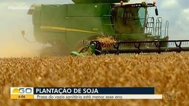 Com vazio sanitário menor, produtores poderão plantar soja seis dias antes do prazo - Estratégia nas fazendas é evitar o surgimento da ferrugem asiática.