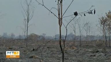Fogo destrói vegetação em Marcelândia - Fogo destrói vegetação em Marcelândia.