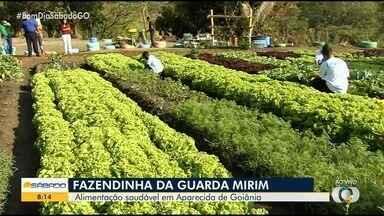 Crianças da Guarda Mirim cuidam de horta 100% orgânica, em Aparecida de Goiânia - Local fica na Fazendinha da Guarda Mirim.