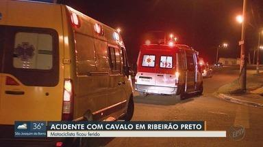 Motociclista fica ferido após bater em cavalo em Ribeirão Preto - Acidente ocorreu na Avenida Marechal Costa e Silva na noite de sexta-feira (13).