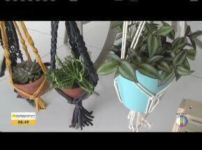 Exposição de suculentas acontece em Ipatinga - A exposição começa neste próximo domingo (15), no Vale do Aço.