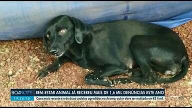 Cadelas são agredidas em clube de Maringá - Diretoria de Bem-estar Animal já recebeu 1,6 mil denúncias de maus-tratos este ano na cidade