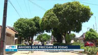 Saiba como proceder para podar árvores, em Santarém - Responsabilidade é da Semma e de moradores; veja na reportagem.