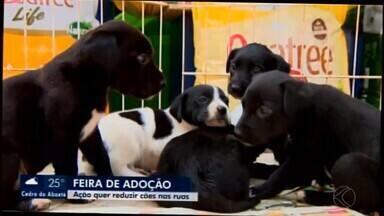 Sábado é dia de feira de adoção de cães em Divinópolis - Evento visa diminuir população de animais de ruas da cidade e incentivar a adoção responsável.