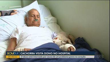 Cachorrinha visita dono que está internado em hospital - Para entrar no hospital, o animal tem que estar higienizado e com as vacinas em dia para não colocar em risco os pacientes