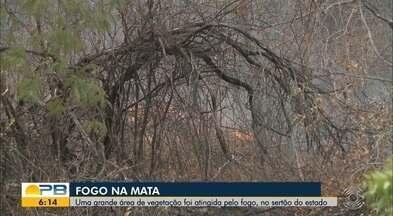 Grande área de vegetação é atingida por fogo, no Sertão da Paraíba - O fogo se alastrou na região de São José da Lagoa Tapada.