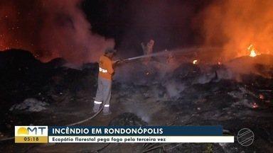 Ecopátio florestal pega fogo pela terceira vez em Rondonópolis - Ecopátio florestal pega fogo pela terceira vez em Rondonópolis