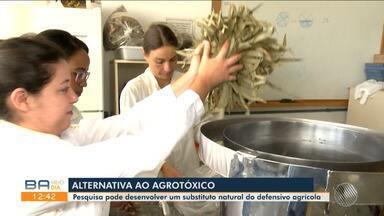 Estudante de Vitória da Conquista cria defensivo agrícola natural à base de eucalipto - A pesquisa busca desenvolver alternativas para os venenos usados em lavouras.