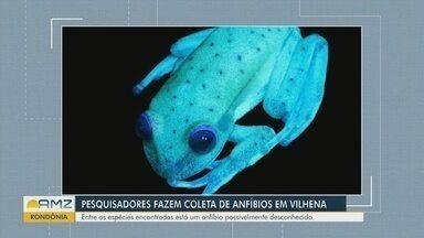 Pesquisadores fazem coleta de anfíbios em Vilhena - Entre as espécies encontradas está um anfíbio possivelmente desconhecido.