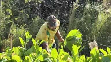 Agricultores investem em produtos orgânicos em Juiz de Fora - Pesquisa do Conselho Brasileiro da Produção Orgânica Sustentável apontou que 19% dos entrevistados consomem este tipo de alimento.