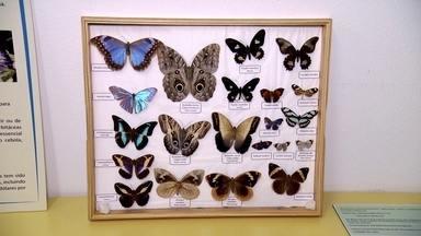 Museu do Instituto Biológico traz grande variedade de insetos - O museu tem uma sala dedicada às abelhas. Um trem faz passeio entre Guararema e Mogi das Cruzes.