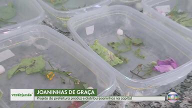 Projeto Verdejando conhece biofábrica de joaninhas - Os insetos são ótimos predadores naturais para hortas. Programa da prefeitura de BH produz e distribui, de graça, as joaninhas para a população.
