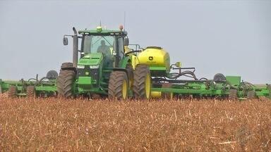 Na região sul choveu menos e plantio deve atrasar - Cultivo tem ocorrido em áreas irrigadas e a safrinha pode ficar comprometida