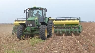 No norte choveu mais em algumas fazendas - Chuvas diárias permitem o cultivo mesmo em áreas sem irrigação.