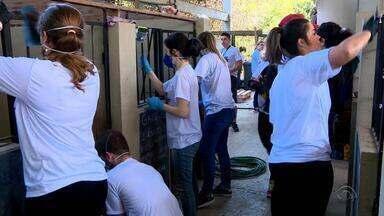 Grupo de voluntários se une para revitalizar canil que cuida de animais abandonados - Assista ao vídeo.