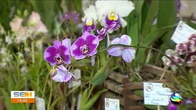 Exposição de orquídeas com palestras e minicursos gratuitos acontece na capital - Exposição de orquídeas com palestras e minicursos gratuitos acontece na capital.