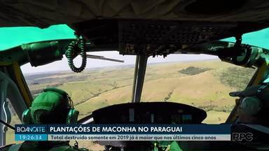 Operação conjunta das policias destrói plantações de maconha no Paraguai - Total destruído somente em 2019 já é maior que nos últimos cinco anos.