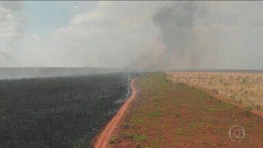 Amazônia e Cerrado concentram a maior parte das queimadas - Fogo atinge de forma diferente os dois maiores biomas do país.