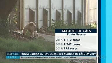 Ponta Grossa registra quase 800 ataques de cães em 2019 - Pessoas mordidas precisam buscar vacina contra a raiva.