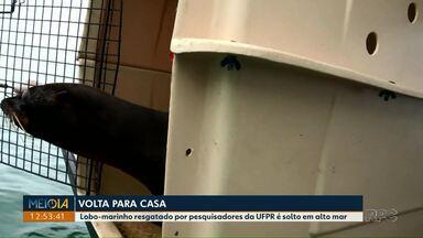 Lobo-marinho resgatado por pesquisadores da UFPR é solto em alto mar - O anima, pego em agosto no litoral do estado, foi solto na Ilha dos Currais.