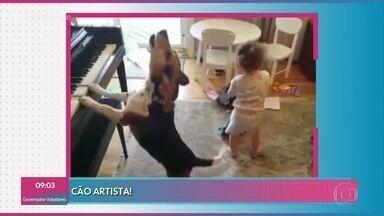 Vídeo de cachorro em solo de piano chama atenção nas redes - Confira e divirta-se
