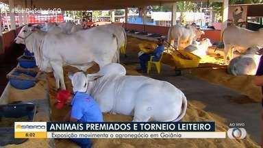 Exposição Agropecuária tem animais leiteiros e animais premiados em Goiânia - Alguns bois chegam a valer mais de R$ 1 milhão.