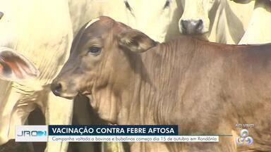 Campanha contra a febre aftosa - Vacinação começa dia 15 de outubro em Rondônia.