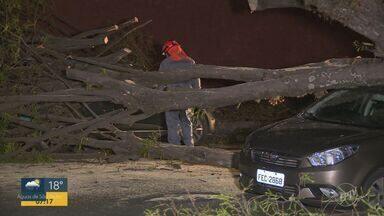 Árvore de grande porte cai em cima de dois carros no bairro Taquaral em Campinas - Moradores já tinham solicitado a retirada da árvore para a prefeitura. A prefeitura alegou que o procedimento segue critérios técnicos e que vai investigar o ocorrido.