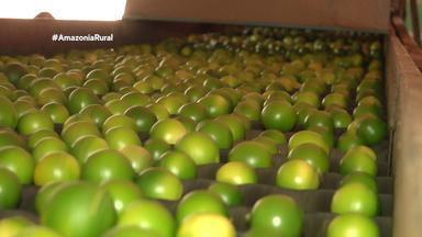 Parte 1: Rio Preto Eva se destaca como maior produtor de laranja no Amazonas - Citricultores estão animados com resultados.