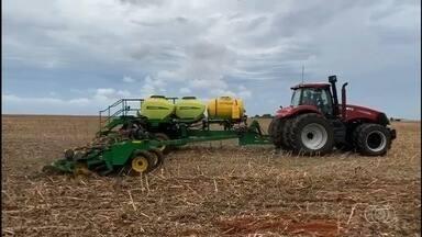 Produtores de soja começam cultivo de soja em Montividiu - Chuvas na região sudeste de Goiás ajudam o desenvolvimento da planta.