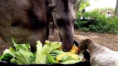 Cozinha do zoológico de Guarulhos prepara cardápio especial para cada bicho - A anta come 12 quilos pela manhã e oito quilos pela tarde. Tudo é pesado para que recebam os nutriente necessários.